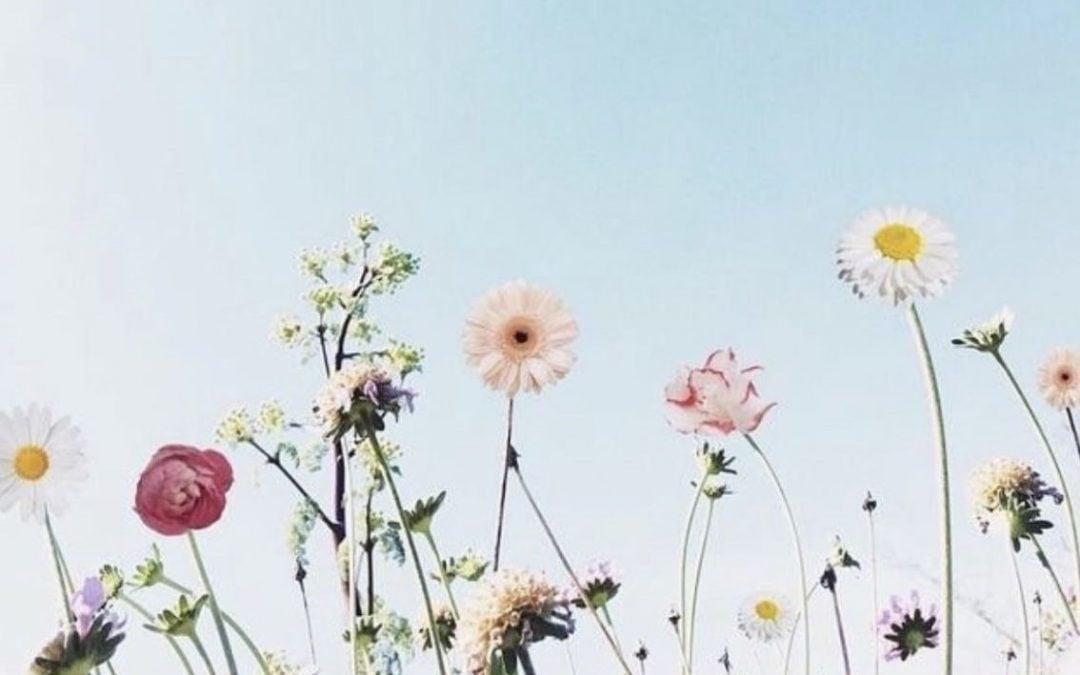 Natuur bloemen